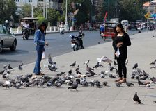 Menina no preto para vestir pombos de alimentação ao lado da estrada fotografia de stock royalty free