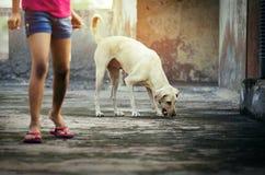 Menina no short que está com alimento do eatnig do cão na parte superior do telhado Fotografia de Stock