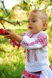 Menina no traje tradicional que alcança uma maçã Fotografia de Stock Royalty Free