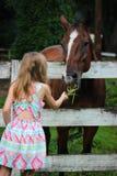 Menina no vestido que alimenta o cavalo de Brown atrás da cerca imagens de stock