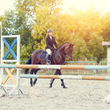 Menina nova do cavaleiro no cavalo que striding ao longo de um obstáculo Imagens de Stock Royalty Free