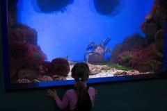 A menina olha o caranguejo de rei no aquário fotografia de stock royalty free