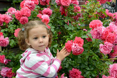 A menina pensativa de três anos na perspectiva de um arbusto das rosas de florescência Imagem de Stock Royalty Free