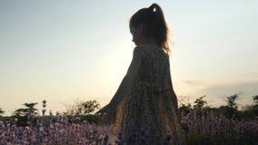 A menina pequena bonita que joga estar sozinho na alfazema do campo floresce no por do sol no sol dos raios O conceito relaxa vídeos de arquivo