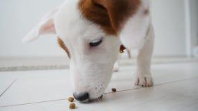 Menina pequena com o cão que joga na esteira em casa no interior branco filme