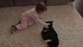 Menina pequena que senta-se no assoalho e que joga com o gato macio vermelho filme