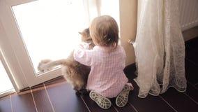 Menina pequena que senta-se no assoalho e que joga com o gato macio vermelho video estoque