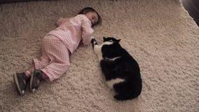 Menina pequena que senta-se no assoalho e que joga com o gato macio vermelho vídeos de arquivo