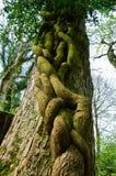Menina que abraça a árvore Foto de Stock