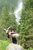 Menina que abraça uma cabra-montesa na frente da cachoeira Foto de Stock Royalty Free