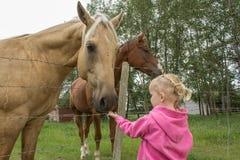 Menina que alimenta um cavalo imagens de stock