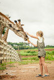 Menina que alimenta um girafa no jardim zoológico Fotografia de Stock