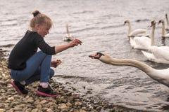 Menina que alimenta uma cisne Fotos de Stock Royalty Free