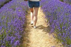 Menina que anda afastado em um campo da alfazema Imagens de Stock Royalty Free