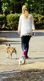 Menina que anda com cães Fotos de Stock