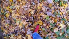 Menina que que anda nas folhas amarelas e murchos caídas à terra no dia ensolarado do outono vídeos de arquivo