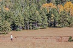 Menina que anda nos álamos tremedores Foto de Stock Royalty Free