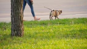 Menina que anda seu cachorrinho do pug em um parque video estoque