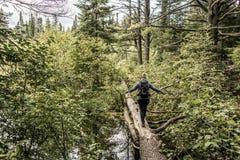 Menina que caminha em um lago canada Ontário de uma paisagem selvagem natural de dois rios perto da água no parque nacional do Al imagem de stock