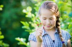 Menina que come morangos silvestres Fotografia de Stock Royalty Free