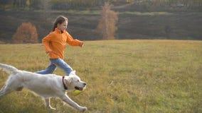 Menina que corre com o golden retriever no campo video estoque