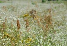 Menina que corre no verão da grama e das flores de prado Fotografia de Stock