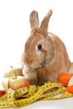 Menina que dá legumes frescos ao coelho Fotos de Stock Royalty Free