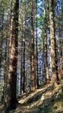 Menina que escala na montanha entre árvores grandes nas horas de verão imagens de stock