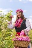 Menina que escolhe rosas cor-de-rosa búlgaras em um jardim fotos de stock