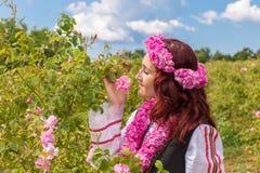 Menina que escolhe rosas cor-de-rosa búlgaras em um jardim foto de stock royalty free
