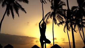 Menina que estica a ioga na manhã nas palmeiras no alvorecer video estoque