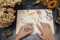 Menina que faz o herbário Imagem de Stock