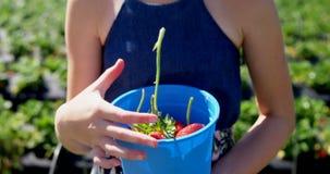 Menina que guarda a cubeta das morangos na exploração agrícola 4k video estoque