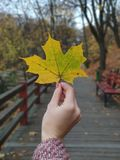 Menina que guarda a folha de bordo amarela à disposição no parque do outono foto de stock