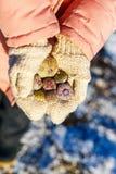 Menina que guarda shell congelados do mar Foto de Stock