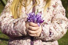A menina que guarda um grupo do açafrão floresce no jardim Fotos de Stock