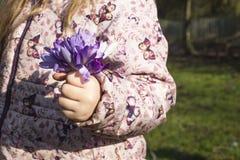 A menina que guarda um grupo do açafrão floresce no jardim Imagem de Stock Royalty Free