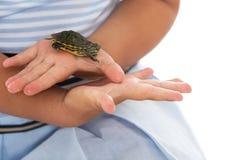 Menina que guarda uma tartaruga Fotografia de Stock
