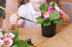 Menina que importa-se com flores em um vaso de flores Fim acima foto de stock royalty free