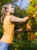 Menina que joga com as folhas Imagem de Stock Royalty Free