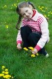 Menina que joga com dentes-de-leão Foto de Stock Royalty Free