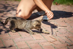 Menina que joga com o gatinho exterior imagem de stock royalty free