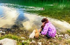Menina que joga com os cães na costa do th do lago preto (Cr Imagens de Stock