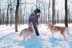 Menina que joga com os cães na neve Imagens de Stock