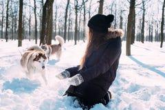 Menina que joga com os cães na neve Fotos de Stock