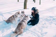 Menina que joga com os cães na neve Imagem de Stock Royalty Free