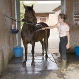 Menina que lava para baixo seu pônei do animal de estimação Imagens de Stock Royalty Free