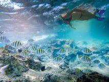 Menina que mergulha em uma abundância bonita da lagoa dos peixes foto de stock royalty free