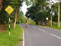 Menina que monta a bicicleta Fotos de Stock Royalty Free