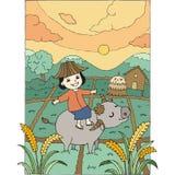 Menina que monta um búfalo no campo Imagens de Stock